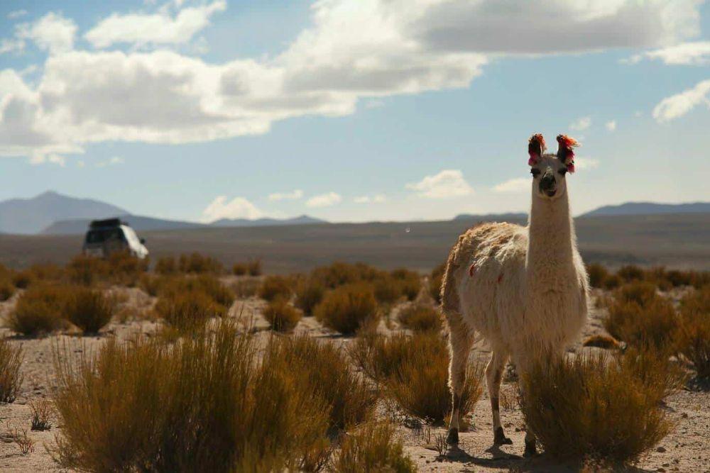 Bolivien_Chile_Llama2