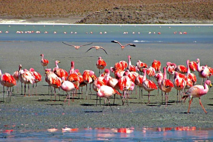 Flamingos im Salar de Uyuni