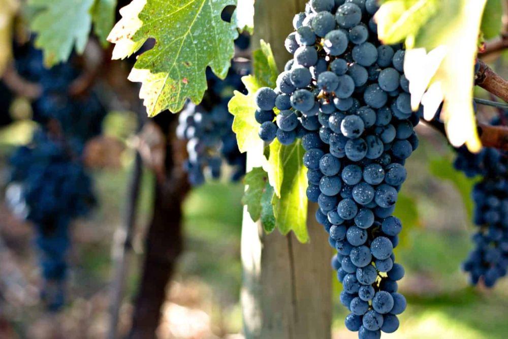 Wein aus Chile
