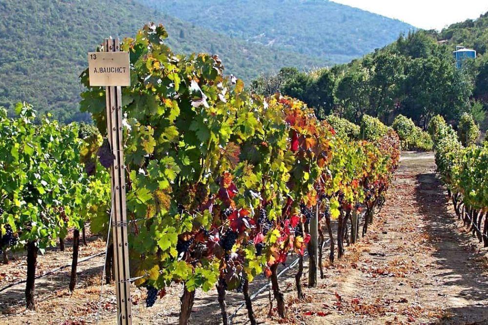 Wein aus Chile Weinberg
