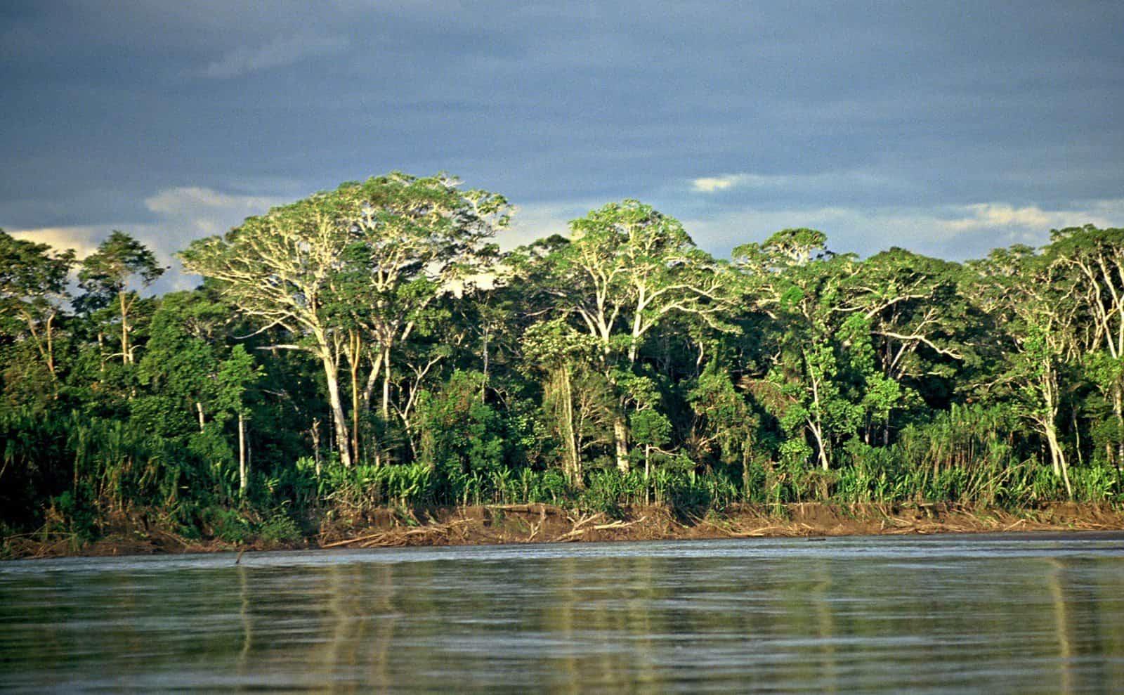 Amazonas Fluss in Ecuador