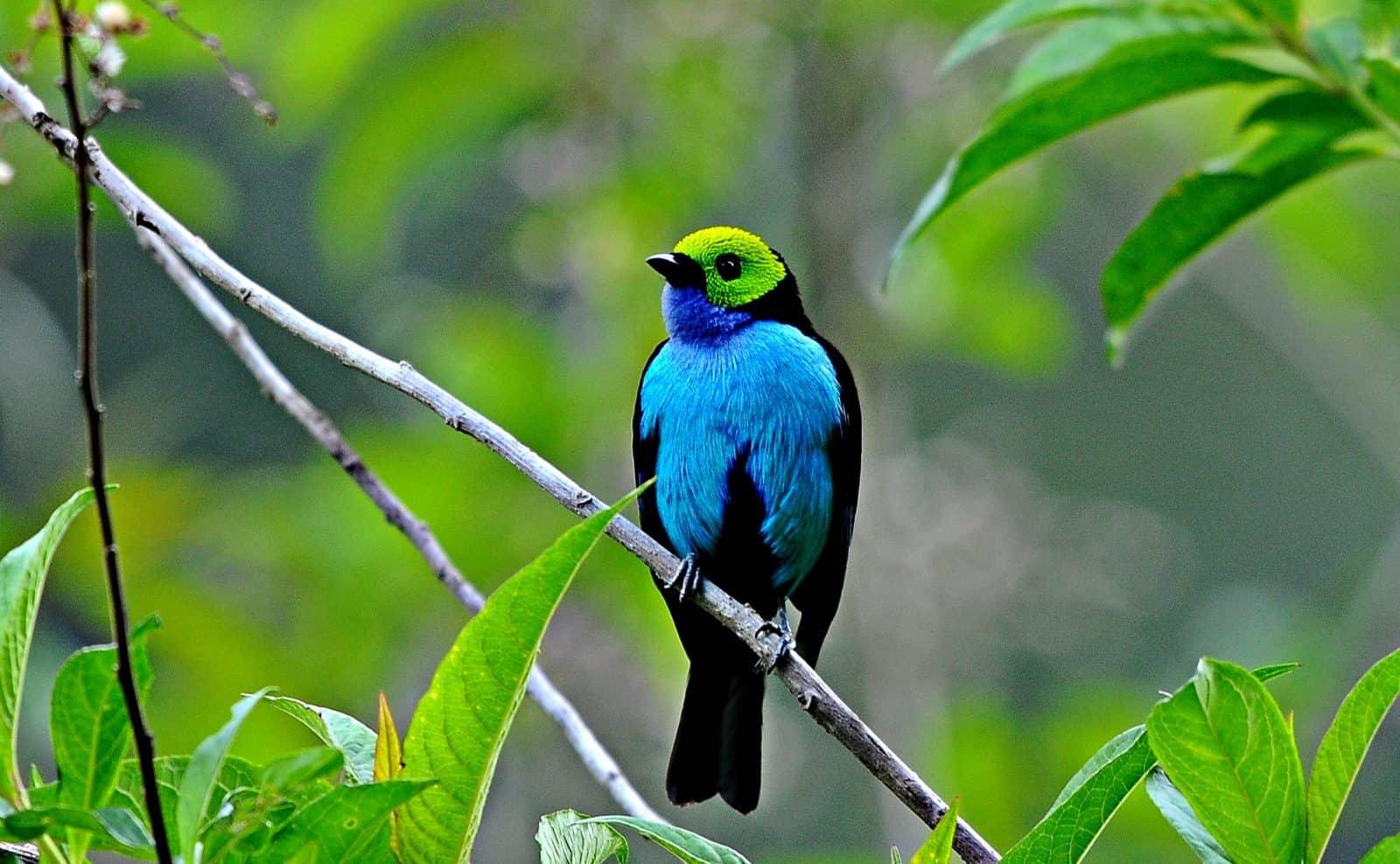 Flora im Amazonas-Regenwald