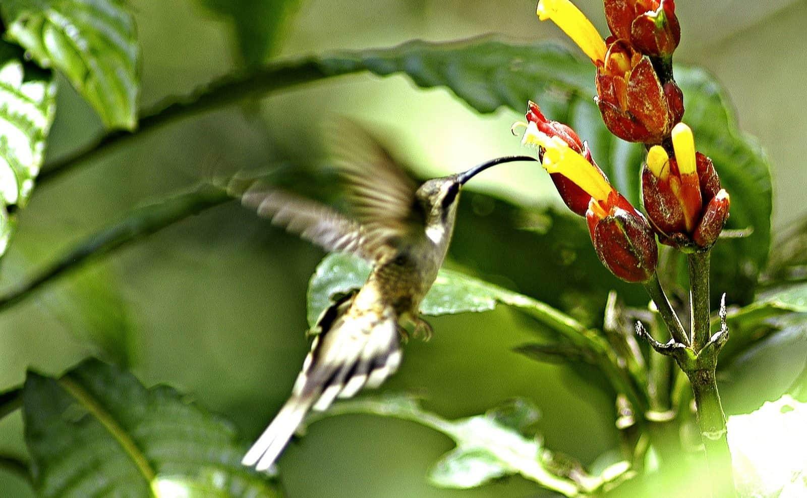 Flora im Amazonas Regenwald