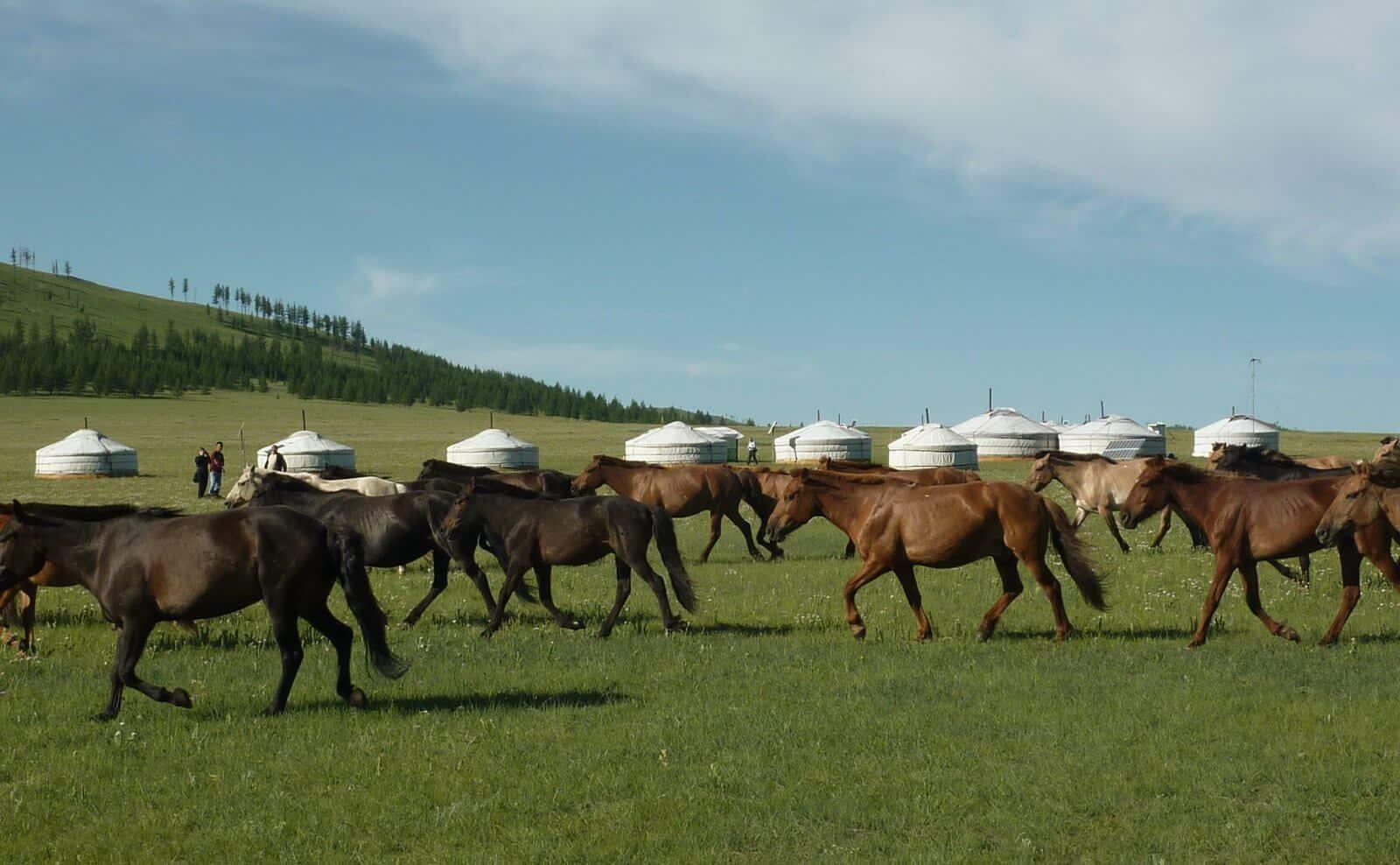 Camp Mongolei