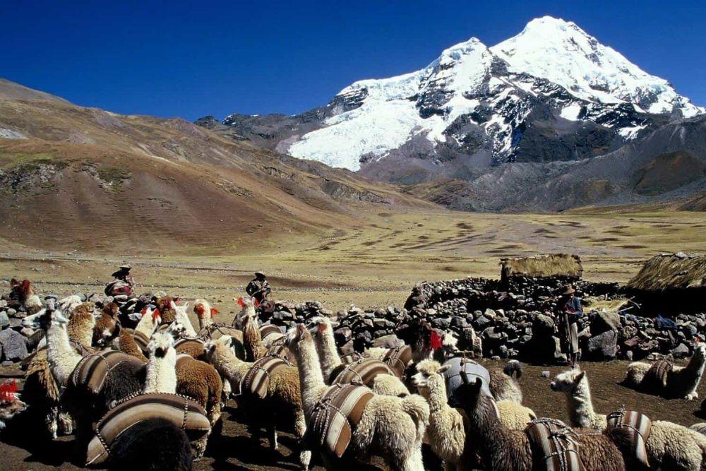 Peru_Trekking_Cordillera_Vilcanota_llamas
