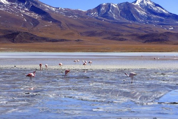 salar-de-uyuni-salzsee-bolivien-flamingo-pinke-lagune