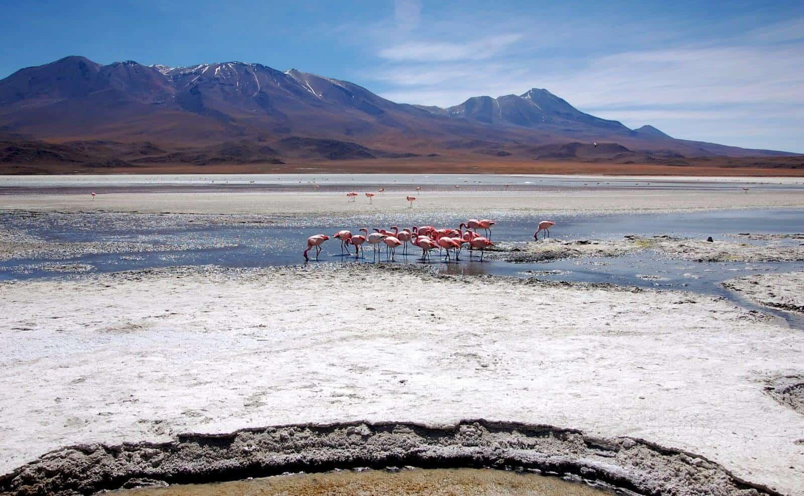 Flamingos Bolivien Laguna
