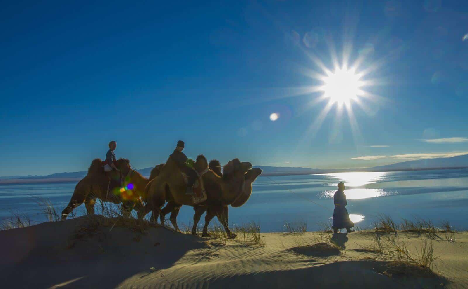 Kamelreiten in der Mongolei