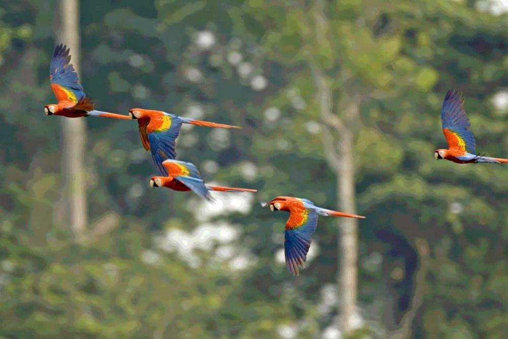 ecuador_amazonas-papagai-e1478529504665