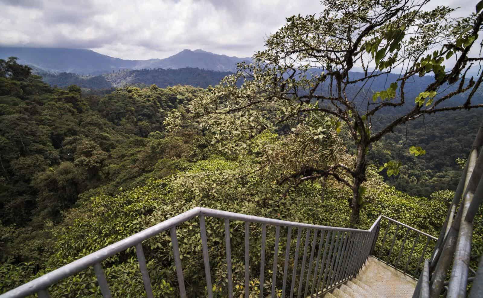 Ausblick Mashpi Lodge im Regenwald