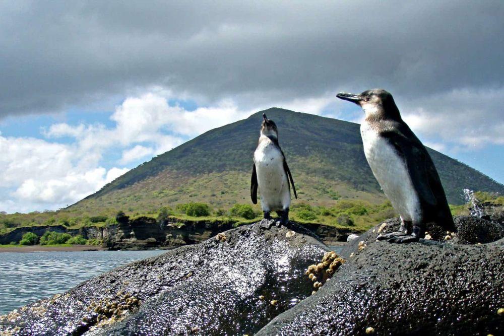galapagos_pinguine-e1478529420444