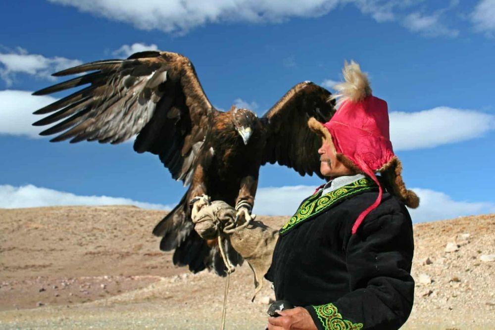 mongolei_falkner