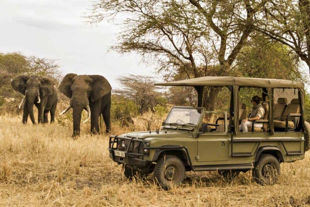 tansania_little-chem-chem-safari
