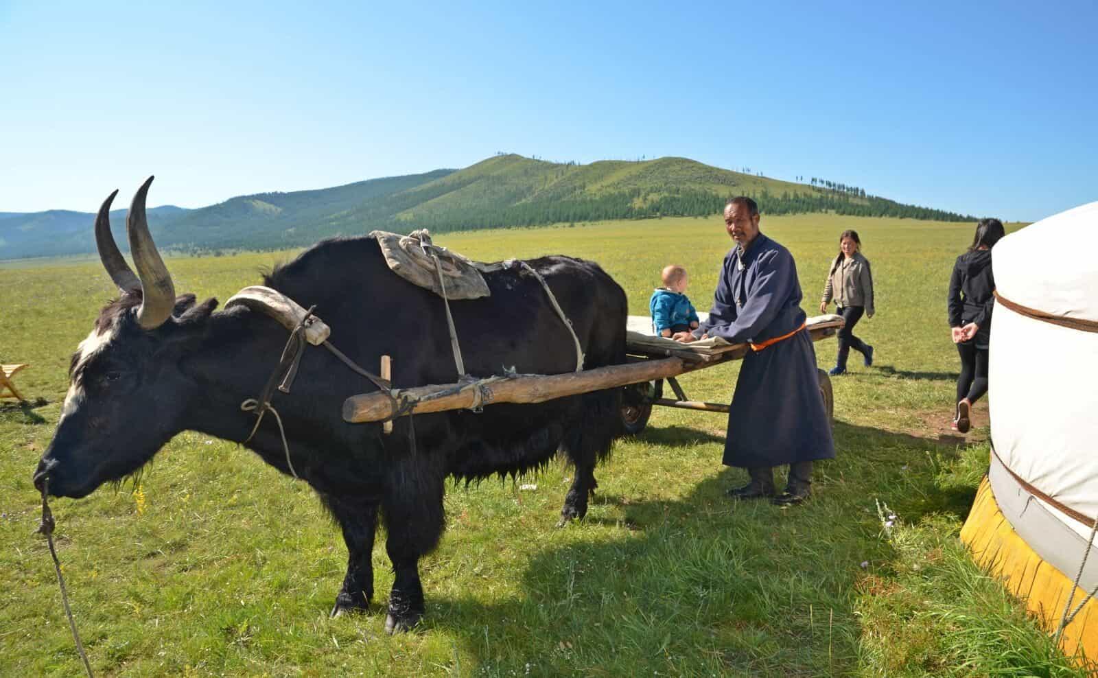 Mongolei Yakktrekking