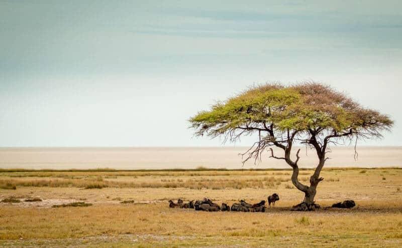 Namibia Roadtrip Etosha