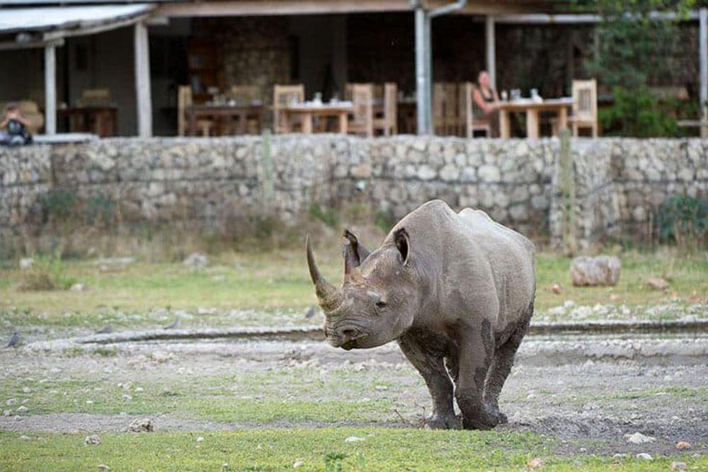 Namibia_Roadtrip_Rhino