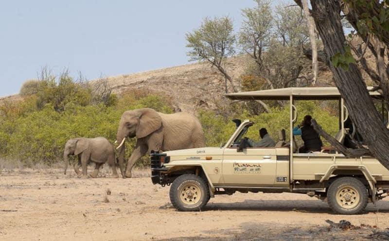 Wüstenadaptierter Elefant