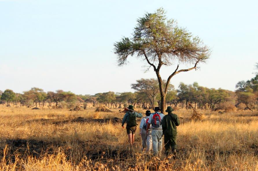 walking-safari-hero