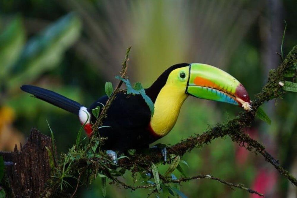 Tortuquero – Sie relaxen an einem der abgeschiedensten Orte Costa Ricas