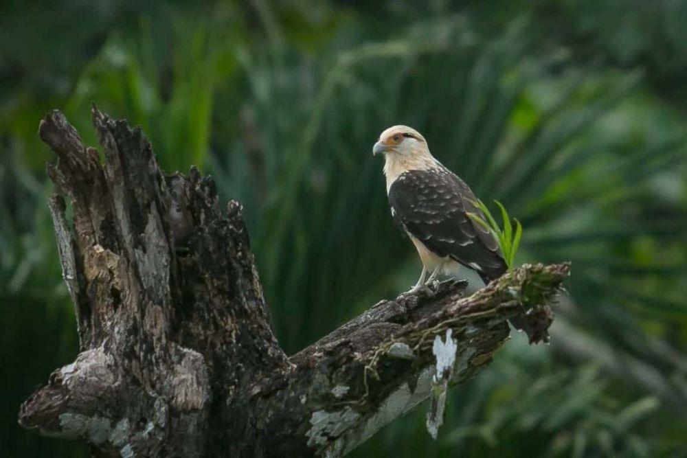 image_birdwatching_in_costa_rica