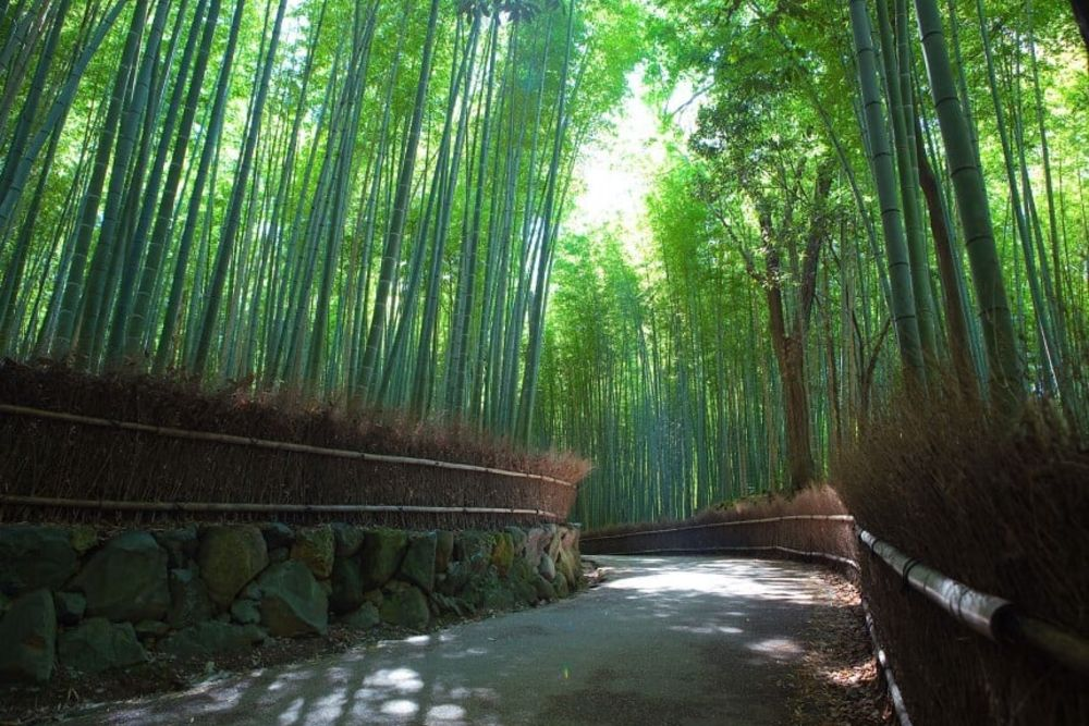 16-Kyoto-Arashiyama-Bamboo-2-860-x-576