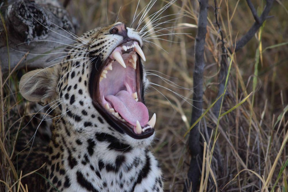 Chobe-National-Park5 (1)