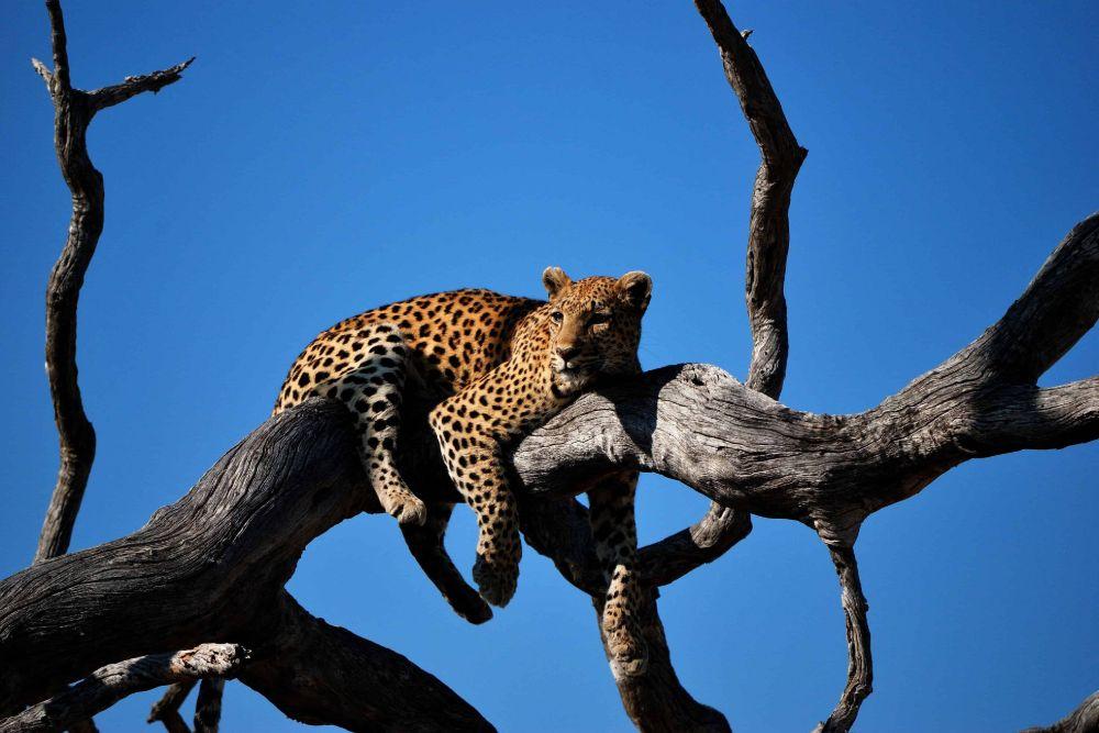 Chobe-National-Park6 (1)