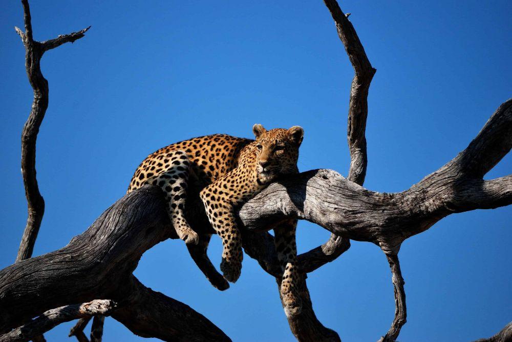 Chobe-National-Park6