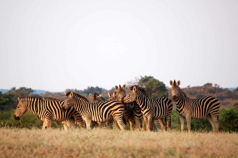 Chobe-National-Park7 (1)