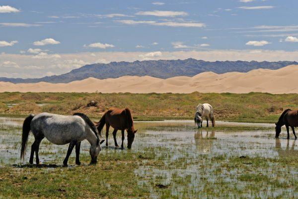 Mongolei Steppe