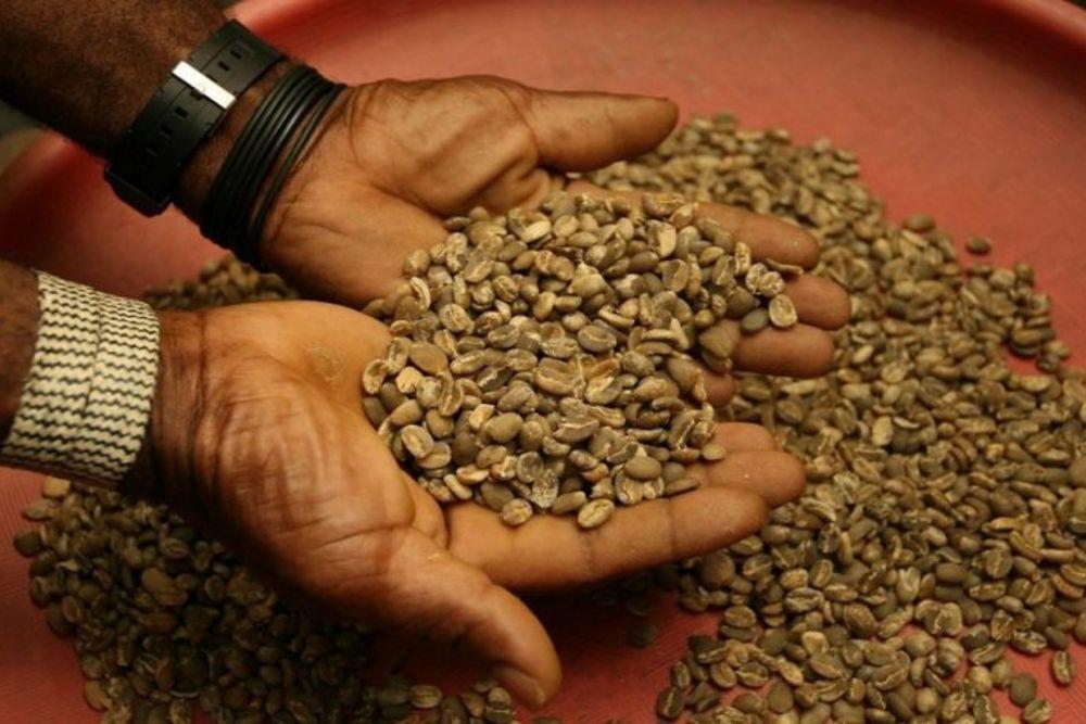 Handlese-Kaffeeplantange-Kolumbien1-768x475