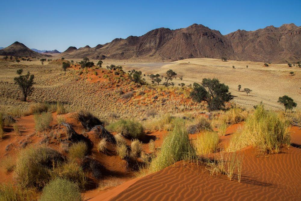 Tok-Tokkies-5_Namibia-2