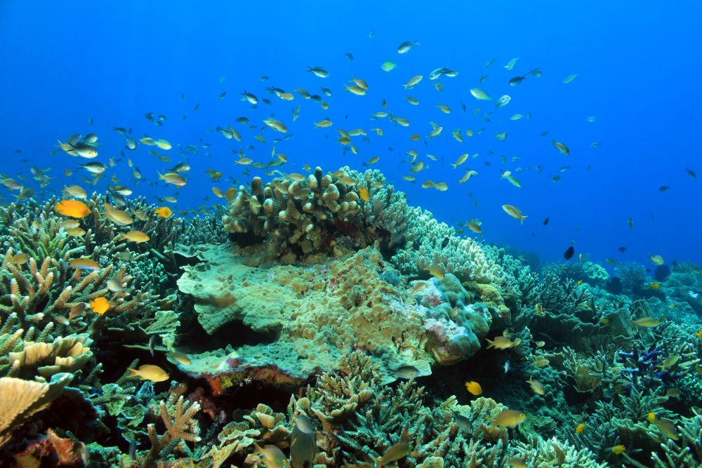 UNDER WATER WORLD AT KOMODO NATIONAL PARK