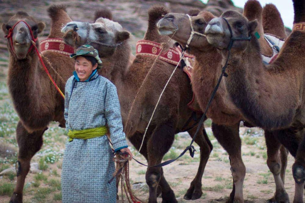 Kamelherde_Mongolei-1