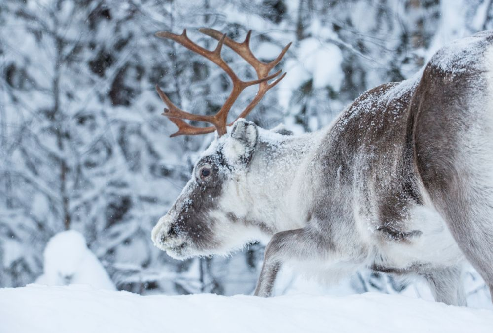 Lappland (23)