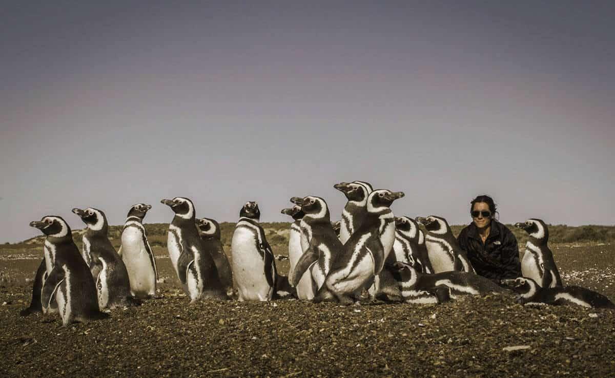 Hotels_Argentinien_Rincon_Chico_Pinguine