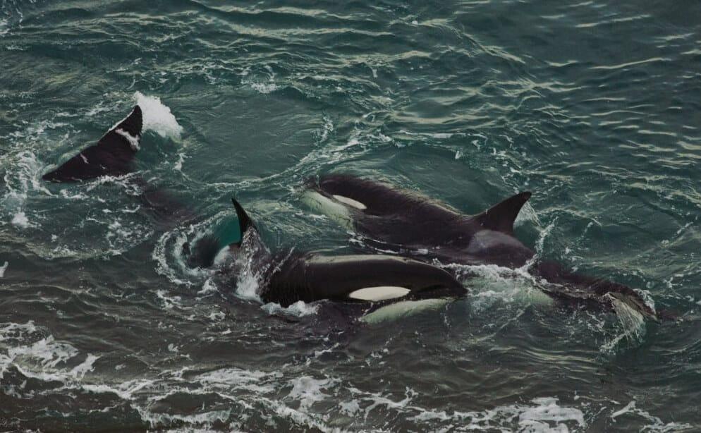 orcas_peninsula_valdez